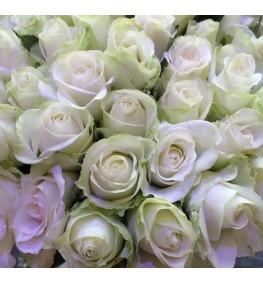 White Roses (50cm)